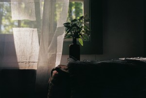 2014-11-Life-of-Pix-free-stock-photos-plants-window-sofa-Doug-Robichaud